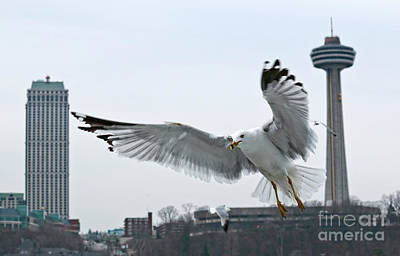 Poster featuring the photograph Niagara Falls With Gulls by Charline Xia