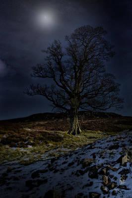 Nidderdale Tree Poster