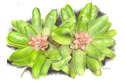 Nidularium Rutilans Poster