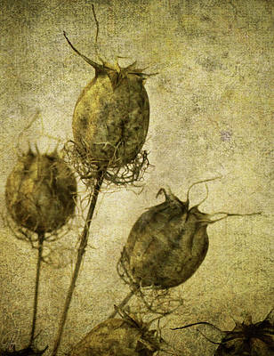 Poster featuring the digital art Nigella Pods by Margaret Hormann Bfa
