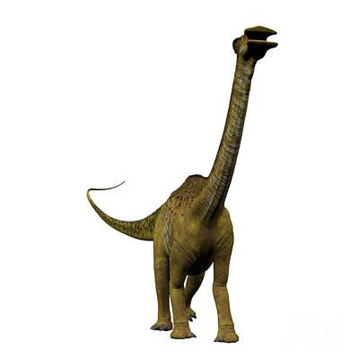 Nigersaurus On White Poster