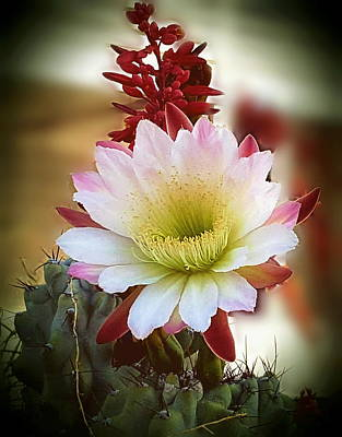 Poster featuring the photograph Night-blooming Cereus 2 by Marilyn Smith