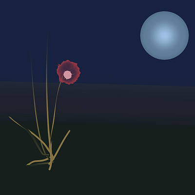 Night Flower Poster by Denny Casto