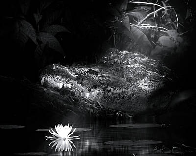 Grotto Of The Swamp Gator Poster by Mark Andrew Thomas