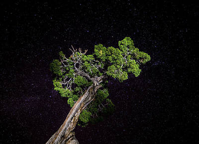 Poster featuring the photograph Night Tree by T Brian Jones