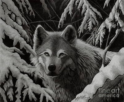 Night Wolf Poster by Stephen McCall