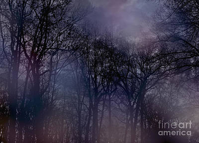 Poster featuring the photograph Nightfall In The Woods by Sandy Moulder