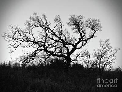 Nightmare Tree Poster
