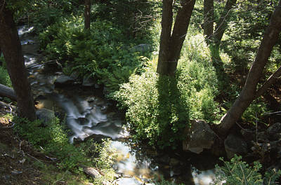 Ninemile Creek Poster by Soli Deo Gloria Wilderness And Wildlife Photography