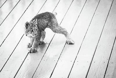Ninja Lynx Kitty Bw Poster