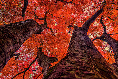 Nishinomiya Japanese Garden - Autumn Trees 2 Poster by Mark Kiver