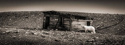 Nobody Home - Black And White Polar Bear Photograph Poster by Duane Miller
