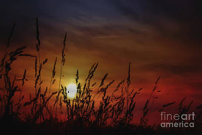 Nocturnal Sunset Poster by Tom York Images