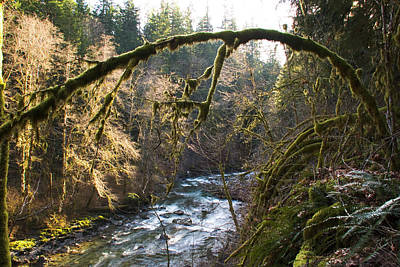 Poster featuring the photograph Nooksack River by Yulia Kazansky