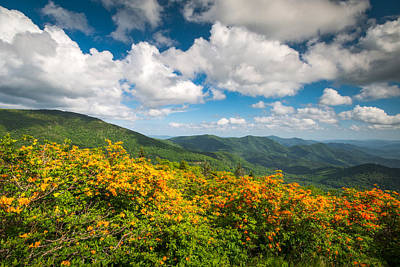 North Carolina Roan Mountain Flame Azalea Flowers Appalachian Trail Poster