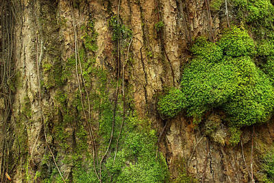 Poster featuring the photograph North Side Of The Tree by Mike Eingle