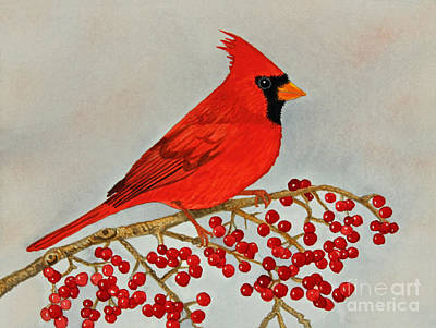 Northern Cardinal Poster by Norma Appleton