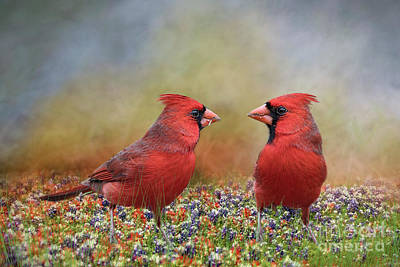 Northern Cardinals In Sea Of Flowers Poster by Bonnie Barry