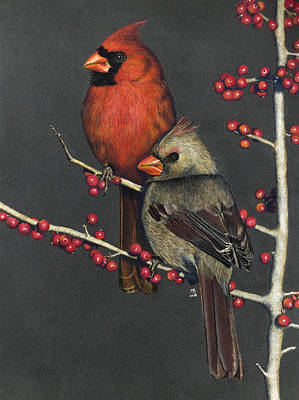 Northern Cardinals On Possum Haw Holly Poster