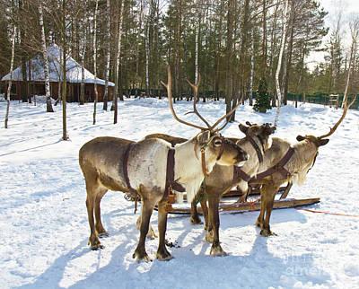Northern Deers Poster by Irina Afonskaya