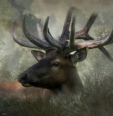 Northern Elk Poster