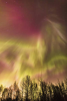 Northern Lights In The Sky Above Cook Poster by Kevin Smith