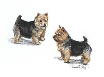 Norwich Terrier Breed Poster by Daniele Trottier