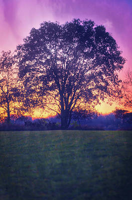 November Sunset And Lone Tree At Retzer Nature Center Poster by Jennifer Rondinelli Reilly - Fine Art Photography