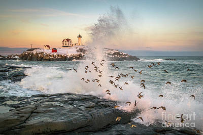 Nubble Wave With Sandpipers Poster by Benjamin Williamson
