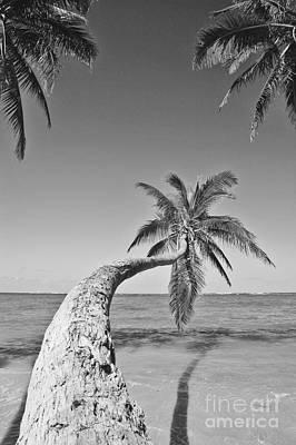 Oahu Palms Poster by Tomas del Amo - Printscapes