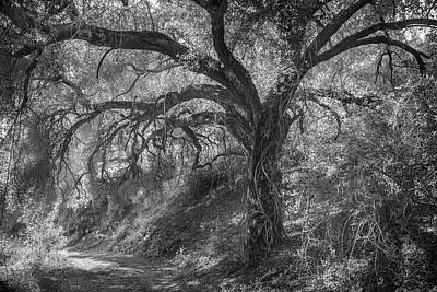 Poster featuring the photograph Oak And Trail by Alexander Kunz