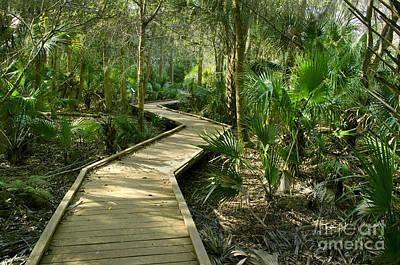 Oak Hammock Trail, Florida Poster by Kenneth Murray