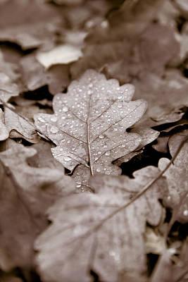 Oak Leaf Poster by Frank Tschakert