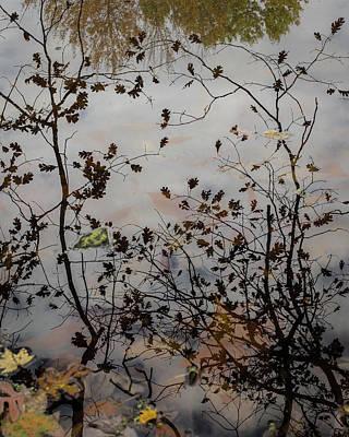 Oak Leaf Reflection At Spirit Springs Poster