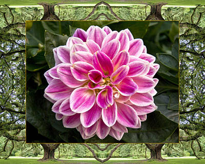Oak Tree Dahlia Poster by Bell And Todd