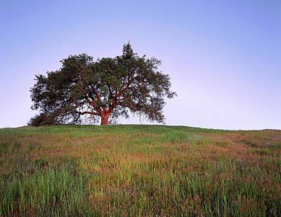 Oak Tree Glow Poster