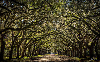 Oak Tree Tunnel Poster