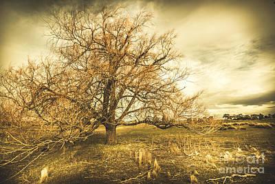 Oatlands Autumn Tree Poster