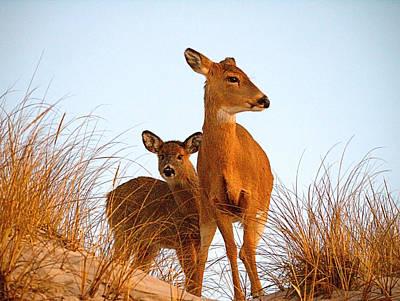 Ocean Deer Poster