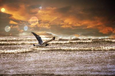 Aaron Berg Photography Poster featuring the photograph Ocean Flight by Aaron Berg