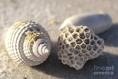Ocean Treasures Poster