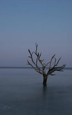 Ocean Tree Poster