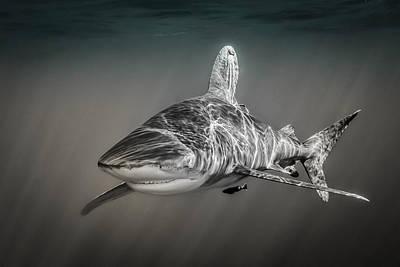Oceanic Whitetip Shark Poster by Jett Britnell