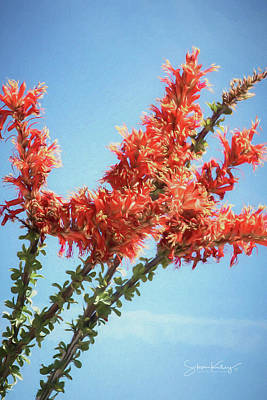 Ocotillo In Bloom Poster
