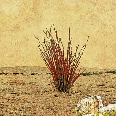 Ocotillo - The Desert Coral Poster