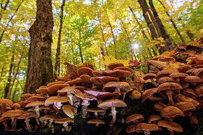 October Mushroom Poster