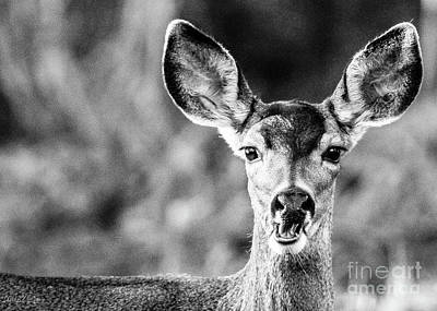 Oh, Deer, Black And White Poster