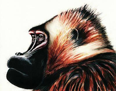 Old Baboon Animal Art Drawing Poster