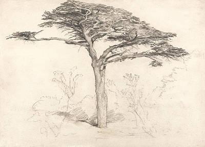Old Cedar Tree In Botanic Garden, Chelsea Poster by Samuel Palmer