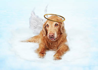 Old Dog Angel On Cloud In Heaven Poster by Susan Schmitz